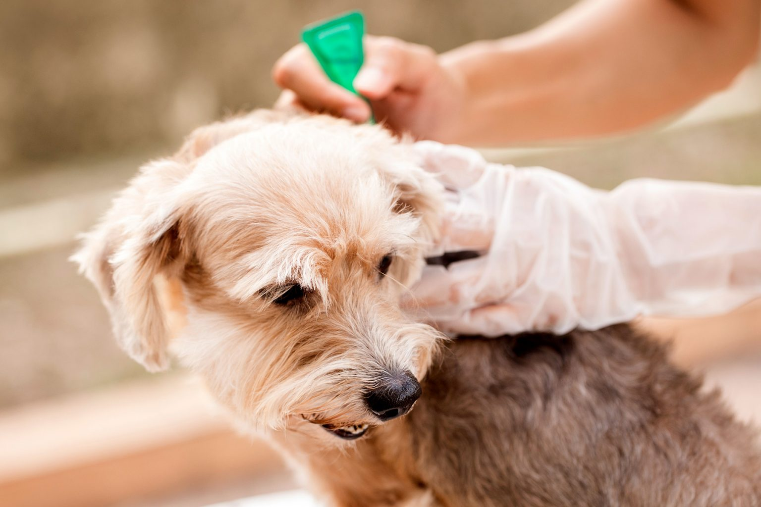 What to Do if Your Pet Still Has Fleas After Using ...