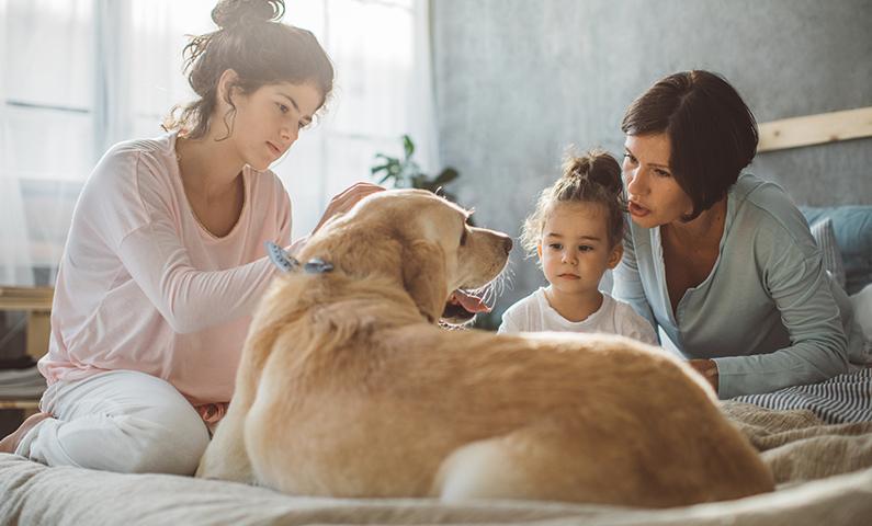 Euthanasia to a Dog