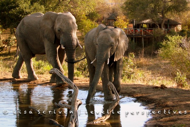evening drinks for guests (and elephants)
